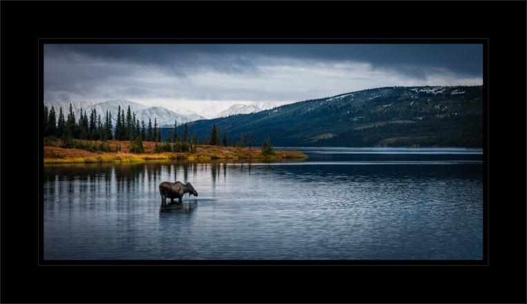 Wonder Moose 3