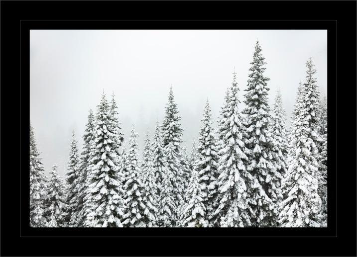 Shasta Forest Snow